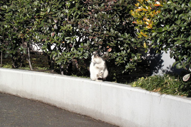 110209_cat.jpg