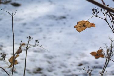 110212_butterflys.jpg