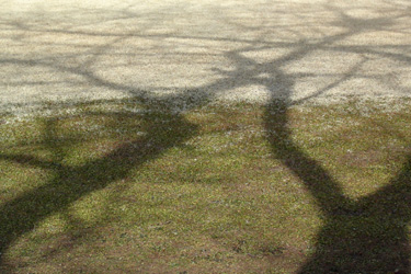 110226_shadow.jpg