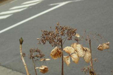 110311_dead_flowers.jpg