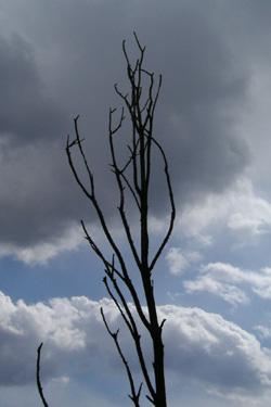 110319_tree.jpg
