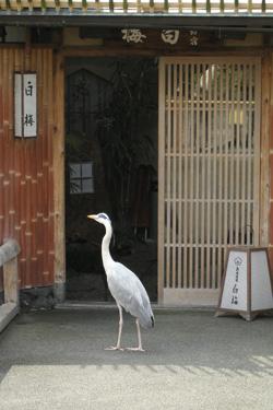 110407_bird.jpg