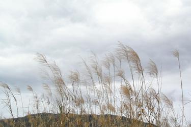 110413_pampas_grass.jpg