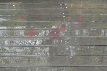 110511_rainy_roses.jpg