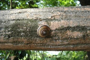 110512_snail.jpg