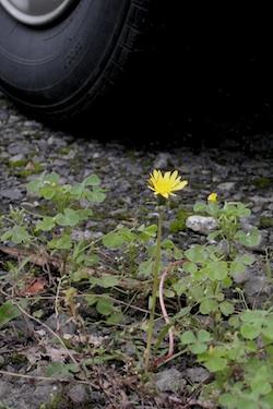 110520_yellow_flower.jpg