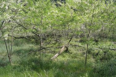 110521_forest.jpg