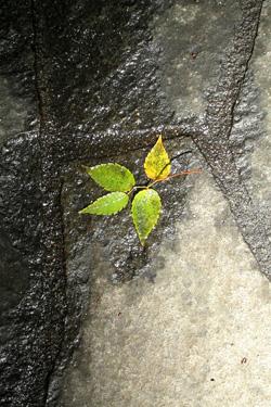 110524_fallen_leaf.jpg