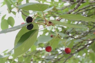 110525_berries.jpg