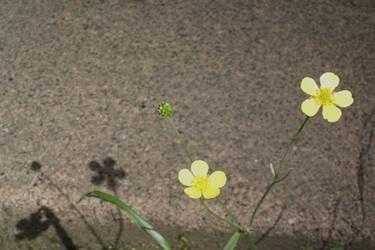 110607_flowers.jpg
