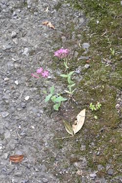 110608_natural_planter.jpg