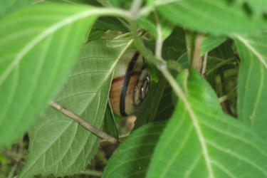 110611_snail.jpg