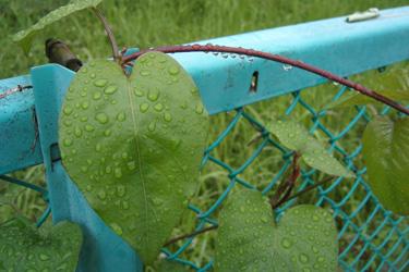 110614_rain_drops.jpg