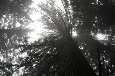 110626_forest_a.jpg