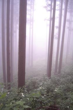 110626_forest_b.jpg