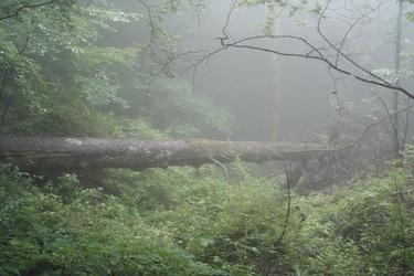 110627_forest.jpg