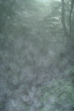 110627_forest_b.jpg
