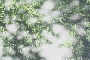 110704_window.jpg