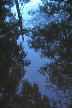 110714_pond.jpg