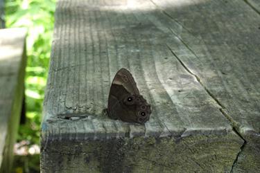 110715_butterfly.jpg