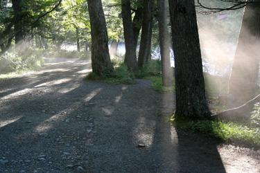 110717_trees.jpg