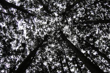 110719_trees.jpg
