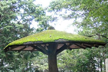 110722_mushroom.jpg