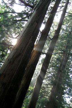 110726_morning_trees.jpg