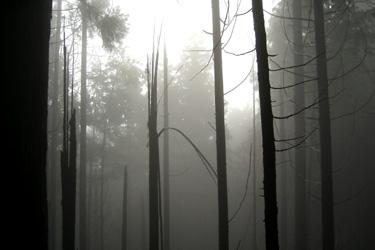 110731_dead_forest.jpg