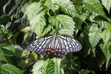 110830_butterfly.jpg