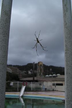 110902_spider.jpg