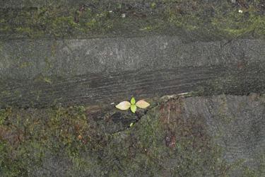 110904_natural_planter.jpg