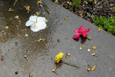 110922_fallen_flowers.jpg