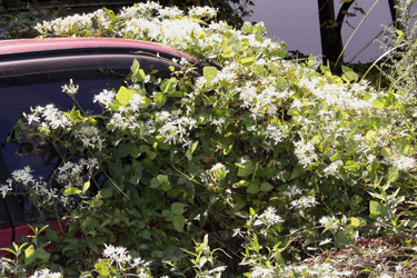 110926_broken_car.jpg