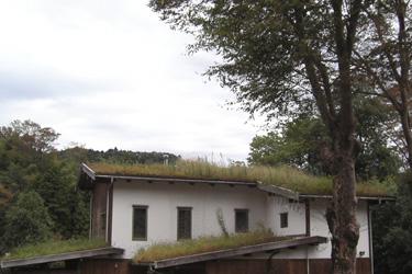 111015_roof_grass.jpg