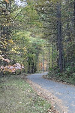 111018_autumn_road.jpg