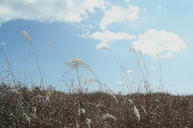 111025_pampas_grass.jpg