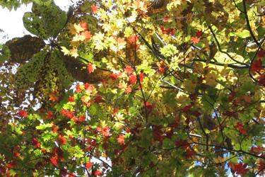 111027_autumn_leaves.jpg