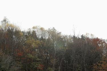111029_autumn_trees.jpg