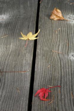 111106_fallen_leaves.jpg