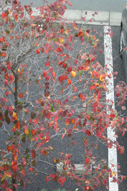 111110_autumn_leaves.jpg