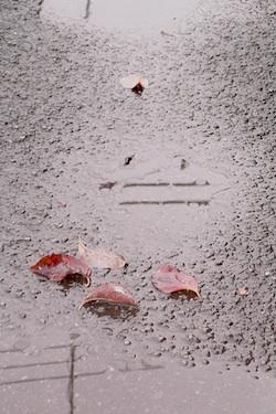 111111_fallen_leaves.jpg
