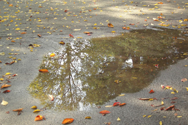 111115_puddle.jpg