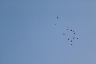 111117_birds.jpg