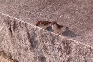 111122_sparrows.jpg