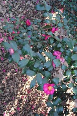 111129_flowers.jpg