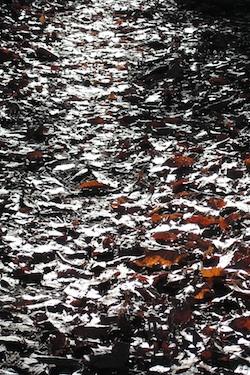 111211_dead_leaves.jpg