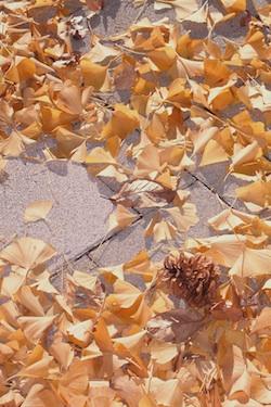 111214_pine_cone.jpg