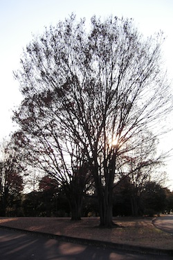 111219_tree.jpg