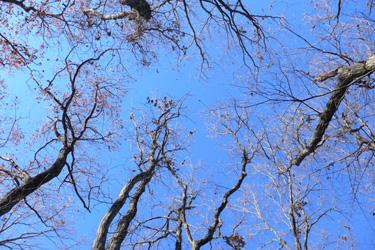 111227_trees.jpg